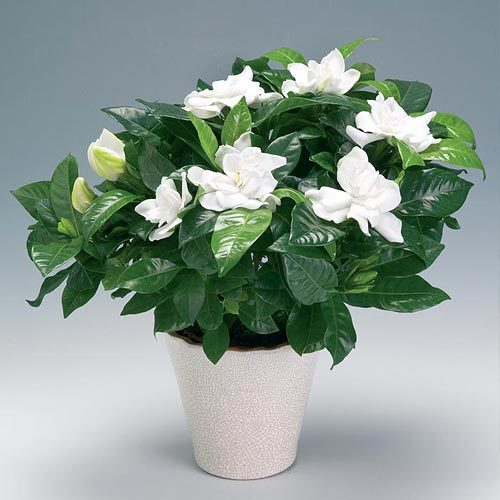 Цветы для офиса: какие неприхотливые и тенелюбивые комнатные растения лучше поставить на работе?